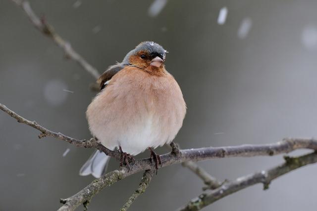 Rendez-vous au jardin les 24 et 25 janvier pour un comptage des oiseaux