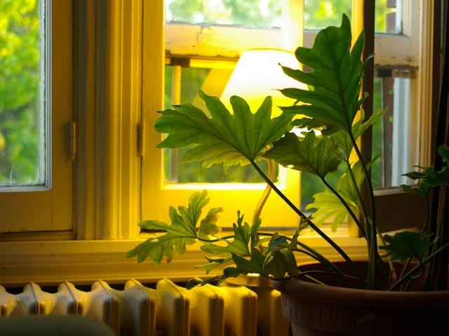 Plantes d\'intérieur pour l\'ombre