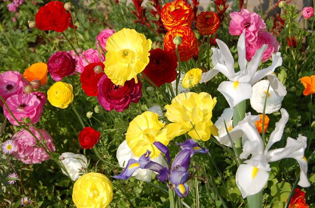 De L 39 Art Floral Avec Les Fleurs Du Jardin