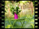Diaporamas Jardin Et Nature P 1
