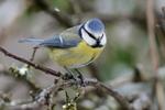 Rendez-vous au jardin les 24 et 25 janvier pour y compter les oiseaux !