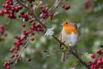Le jardin : un garde-manger pour les oiseaux en hiver