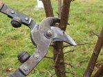 Taille des arbres fruitiers: les bases