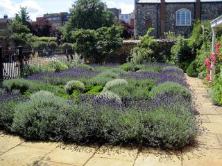Créez votre jardin de plantes médicinales Jardin-herbes-aromatiques-lavande