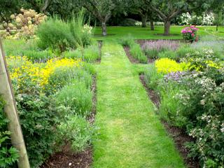 Jardin de simples à côté du verger