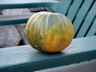 Melon 'Noir des Carmes'