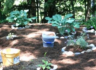 Paillis : végétal ou minéral pour économiser l'eau en été