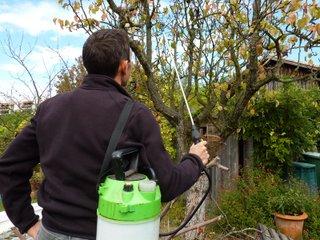Pulvérisation d'un arbre fruitier