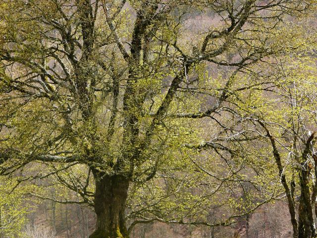 Magie des premières feuilles (Le réveil du jardin)