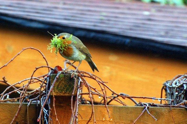 Petit à petit, l'oiseau fait son nid...
