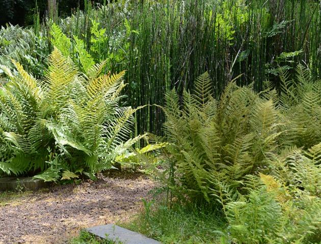 fougere en pot interesting house shape glass geometric terrarium tabletop succulent plant fern. Black Bedroom Furniture Sets. Home Design Ideas