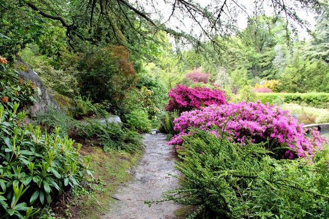 Taches colorées des azalées (Créer un jardin japonais)