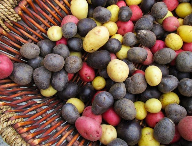 Un potager original : cultivez des légumes et des plantes qui changent