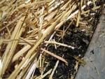 Paillis et mulch pour économiser l'eau