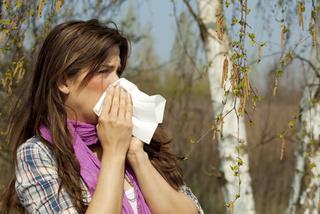 Allergie respiratoire au pollen de bouleau