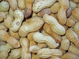 Graines d'arachides dans leur coque, séchées