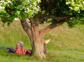 Les arbres à sieste