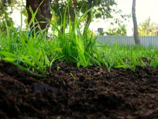 Apport de compost au gazon