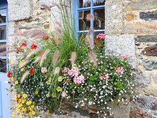 Plantes pour jardini res peu gourmandes en arrosage for Plantes ombre exterieur nord