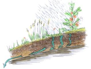 Lessivage du sol par l'eau de pluie