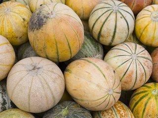 Melons variés