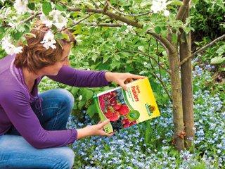 Engrais arbres fruitiers et petits fruits
