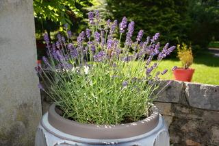 Plantes Pour Jardini Res Peu Gourmandes En Arrosage