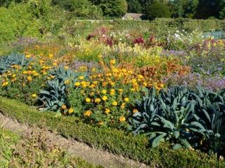 Potager ornemental : bordures de buis, fleurs et choux