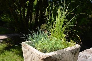 Sedums et graminées pour terrasse plein sud
