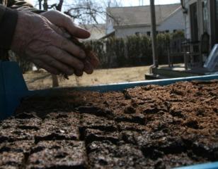 Semis en terrine : couverture des graines