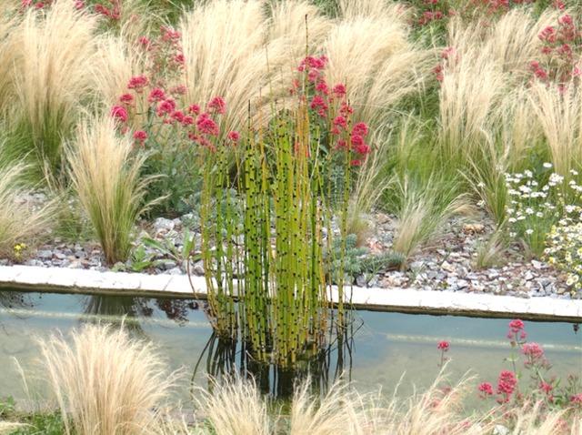 Plantes graphiques (Créer un jardin contemporain)