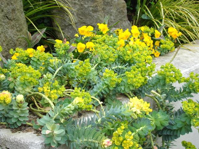 Un jardin hypoallerg nique les plantes allergisantes for Plantes decoratives jardin