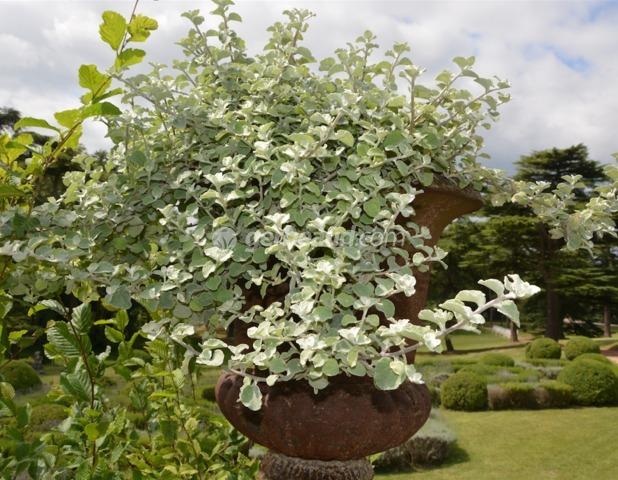 Plantes pour jardini res peu gourmandes en arrosage for Plante exterieur toute saison