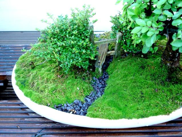 Cultiver et planter les mousses d coratives au jardin for Mini jardin japonais d interieur