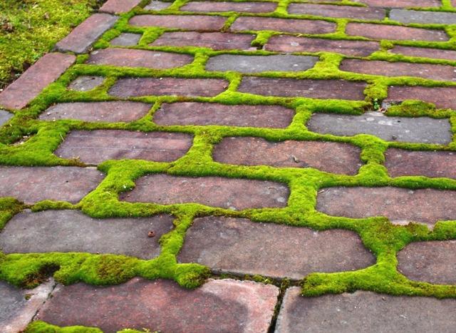 Cultiver et planter les mousses d coratives au jardin - Eliminer la mousse sur les dalles ...