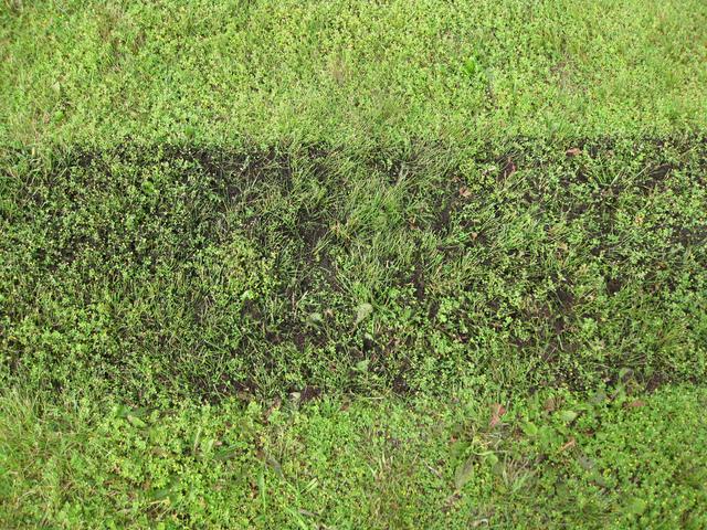Compost utilisations au jardin au potager et pour les for Supprimer la mousse de la pelouse