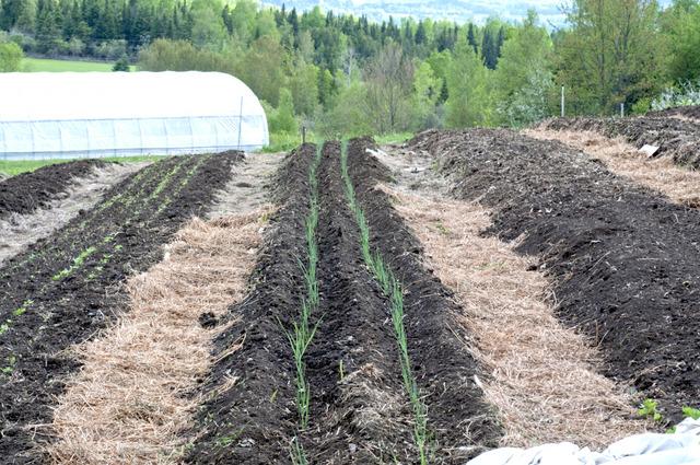 Semis de poireaux quand comment for Jardin quand planter