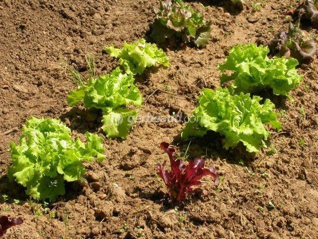 Conseils de jardinage et jardin facile