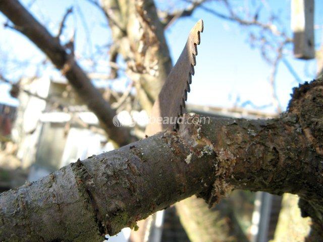 Tailler une branche à la scie