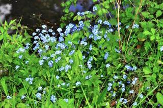 Plantes de berge : que planter au bord d'une pièce d'eau ?
