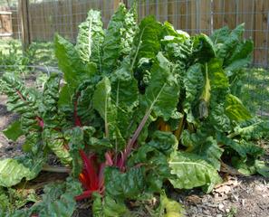 Sol argileux, sableux, acide ou calcaire : quels légumes cultiver