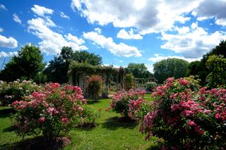 Roseraie, Parc de la Tête d'Or, Lyon