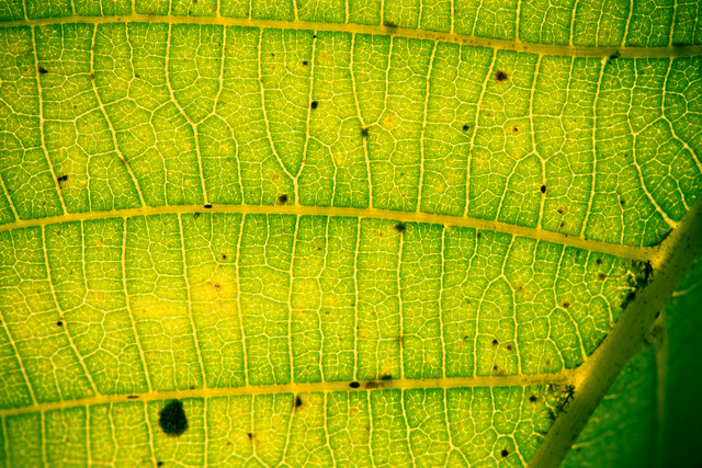 Photosynthèse chez les plantes  : définition et explications