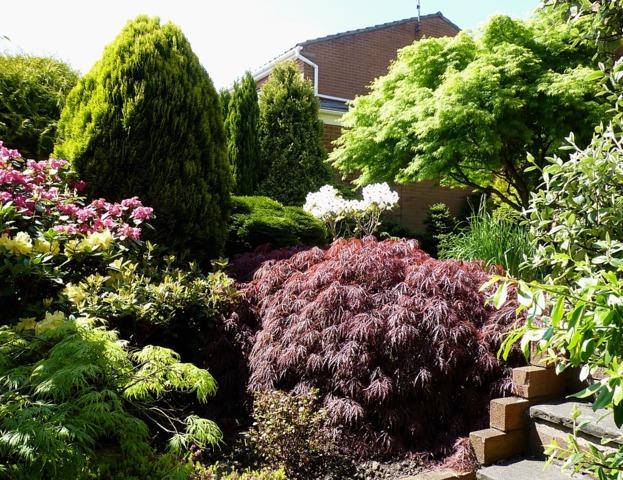 Jardin de ville conseils de cr ation d 39 entretien choix for Arbre pour petit jardin