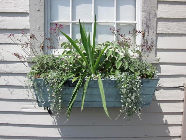 Quelle plante pour une chambre comment d corer son int for Plante pour chambre