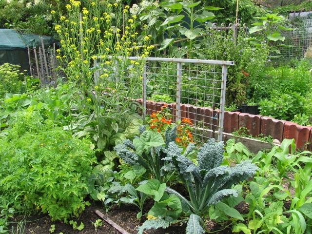 Un potager sans entretien quelles plantes astuces de for Association entretien jardin