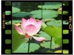 Les plus belles plantes aquatiques