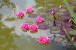 Diaporama : Les plus belles plantes aquatiques