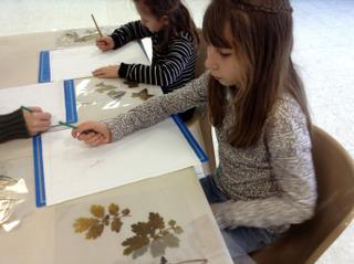 Création d'un herbier dessiné avec des enfants