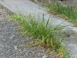 Mauvaises herbes : que faire ?